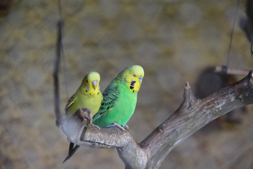 Birds, Nature, Feathers, Animal
