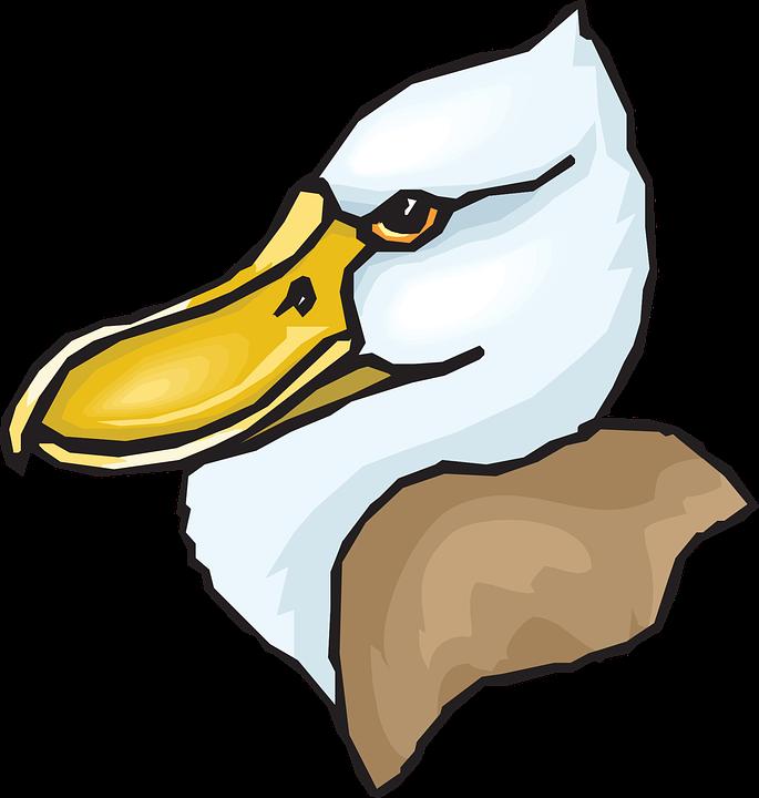 Head, Big, Bird, Duck, Feathers, Beaked, Beak
