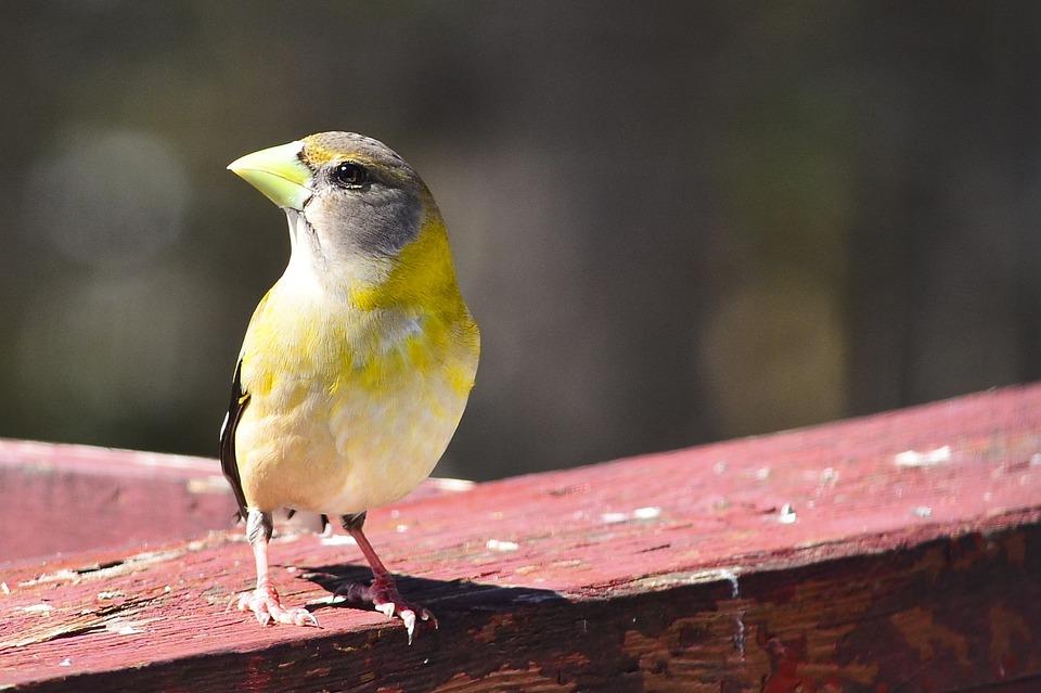 Mont-tremblant, Bird, Animal, Feathers