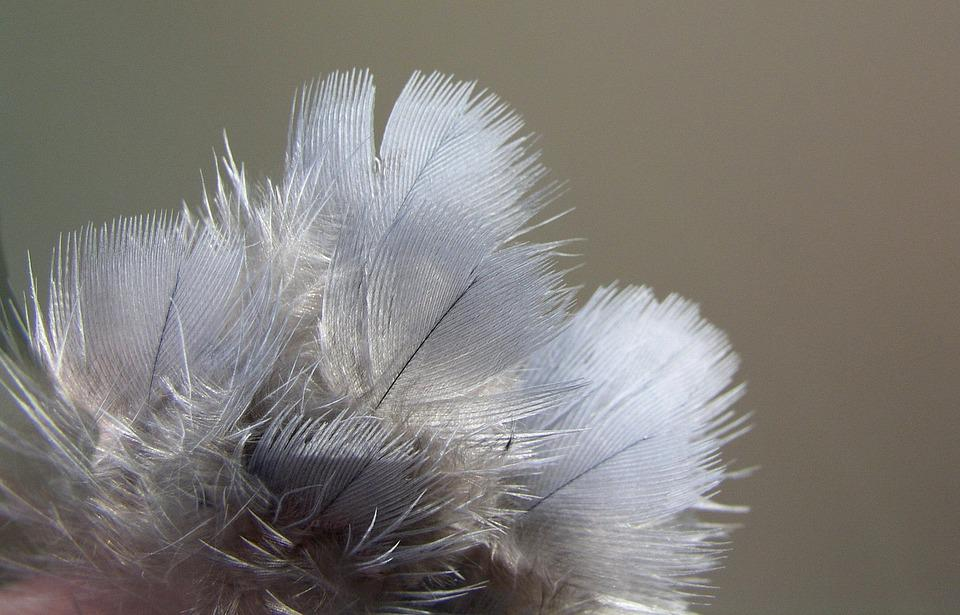 Feathers, Bird, Nature, Texture