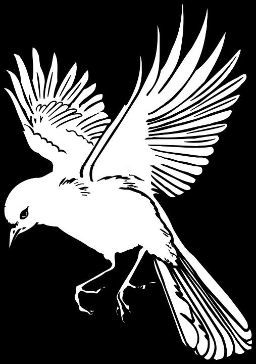Bird, Wings, Landing, Feathers