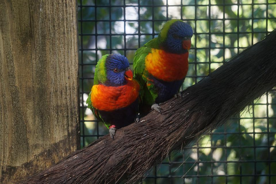 Lorikeet, Zoo, Bird, Colorful, Plumage, Feathers