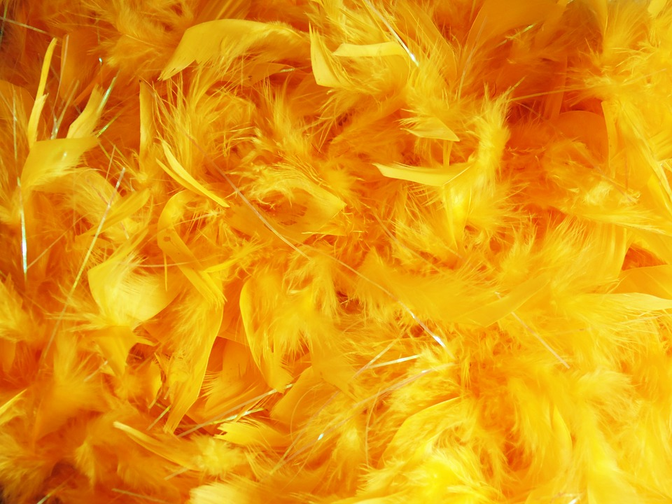 Feathers, Background Image, Texture, Dyed, Color