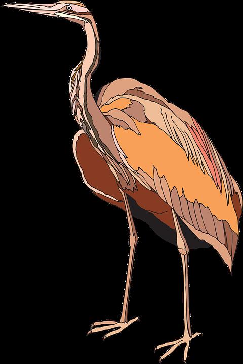 Heron, Purple, Bird, Wings, Standing, Feathers, Ardea