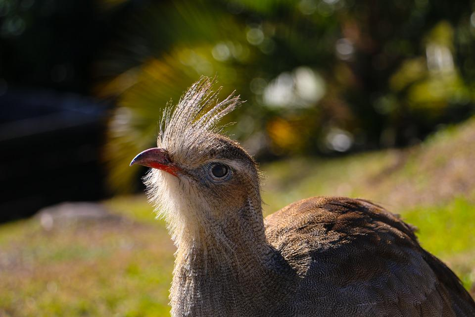 Bird, Look, Beak, Feathers