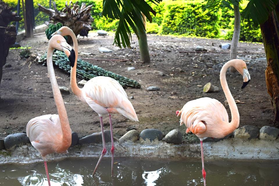 Flamingo, Nature, Turkey, Ave, Color, Feathers