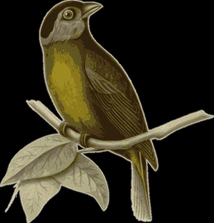 Bird, Feathers, Animal, Brown, Sitting, Twig, Branch