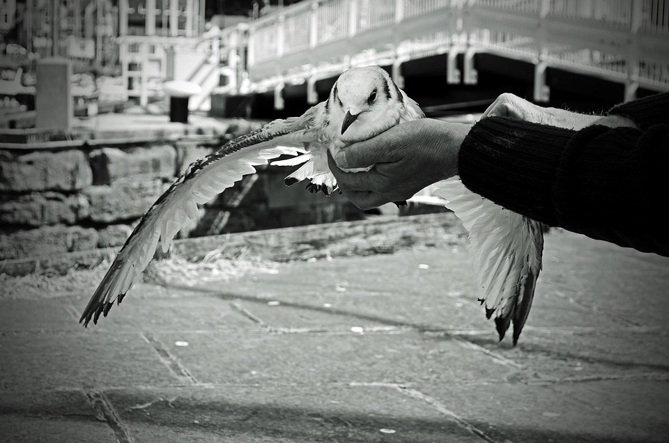 Seagull, Bird, Feathers, Flight, Wings, Female, Wounded