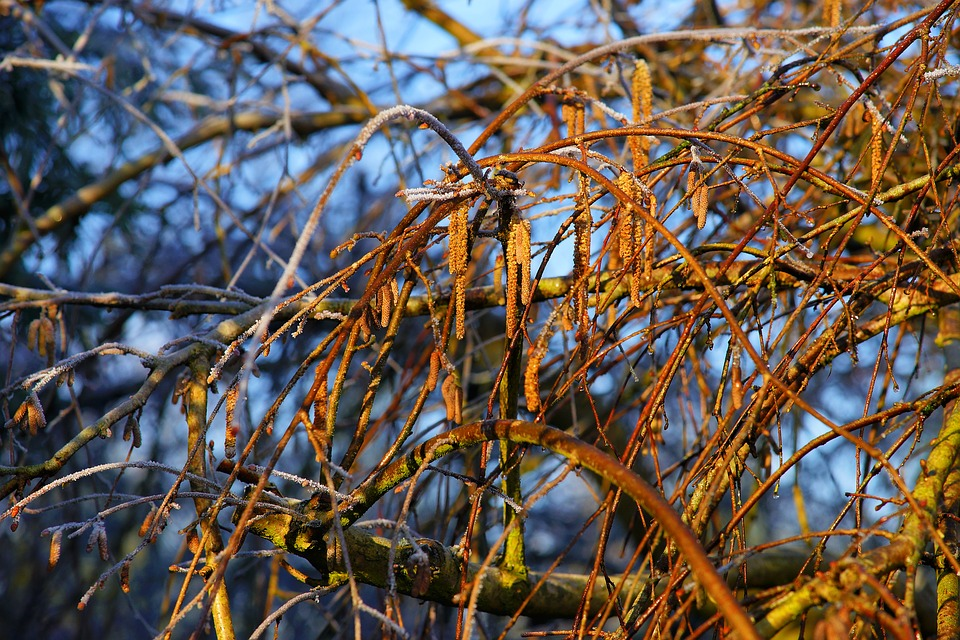 Nature, Tree, February, Winter, Season, Plant, Close
