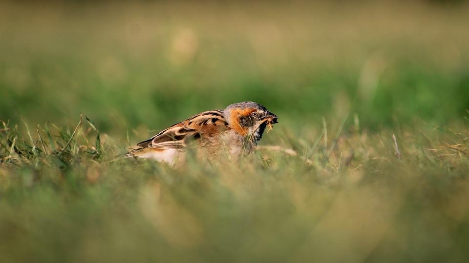 Bird, Weaverbird, Colourful, Feeding, Beautiful Bird