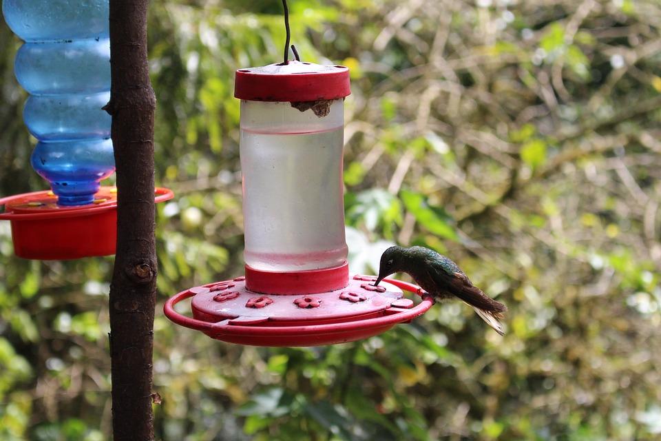 Hummingbird, Bird, Close Up, Feeding, Tropical
