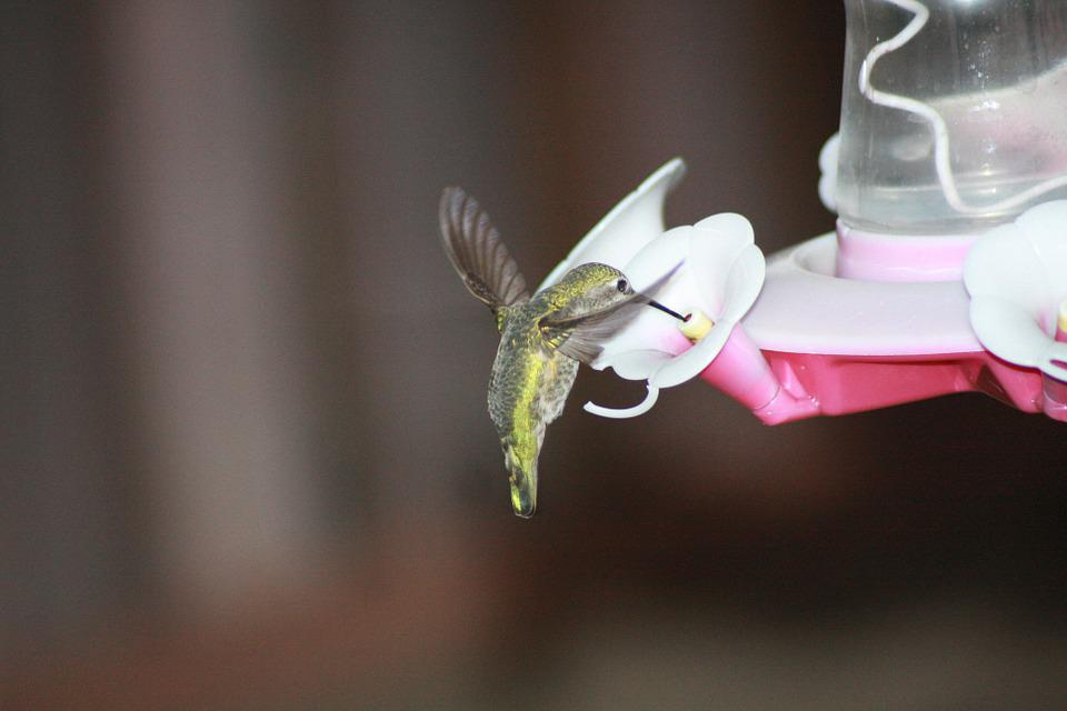 Hummingbird, Feeding, Hovering, Ruby-throated, Feeder