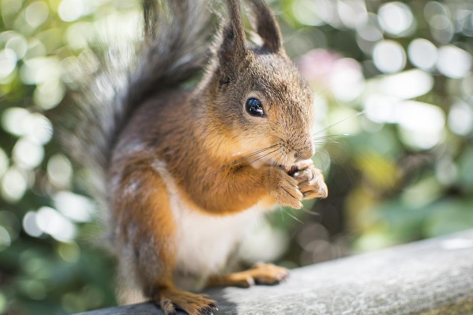 Squirrel, Animal, Wildlife, Park, Feeding, Rodent