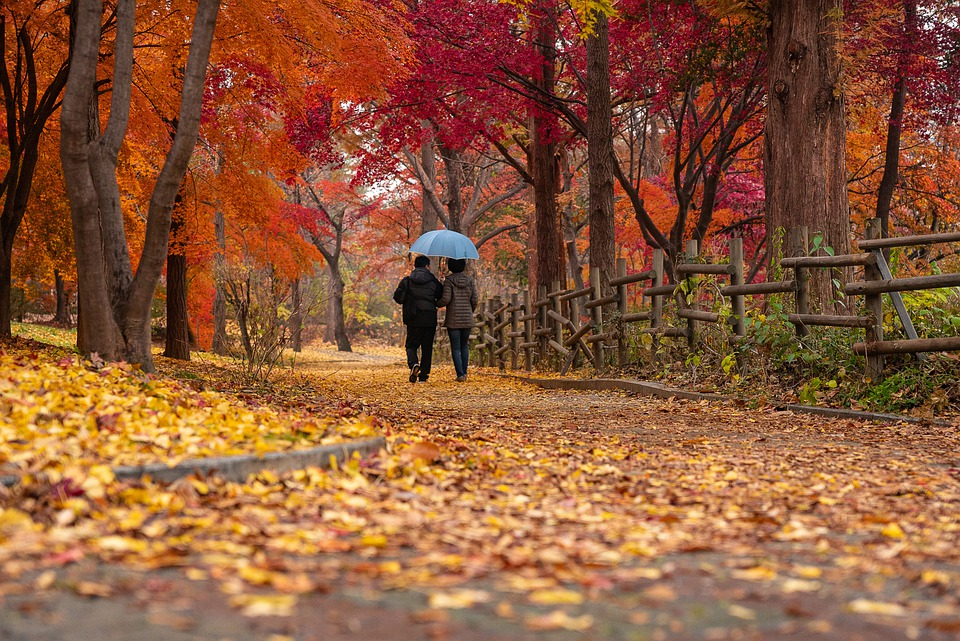 Couple, Old, Autumn, Feel, Leaves, Maple, Color, Love