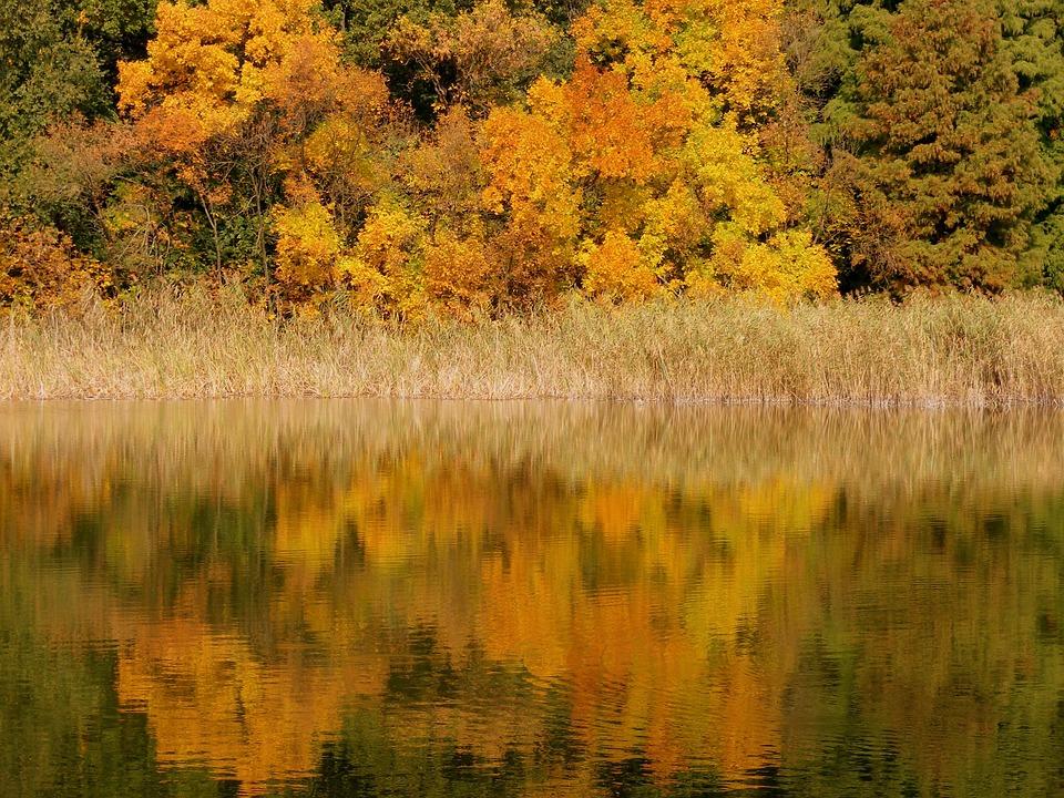 Autumn, Lake, Trees, Leaf, Mirror, Feerie, Yellow