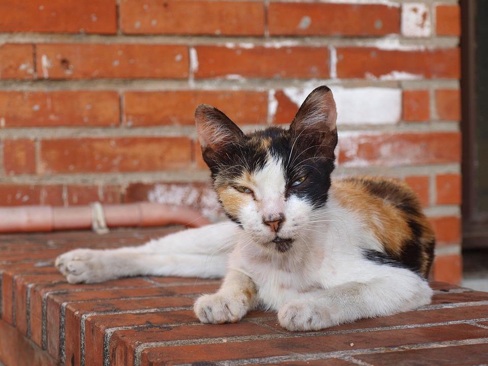 Cat, Stray, Animal, Feline, Fur