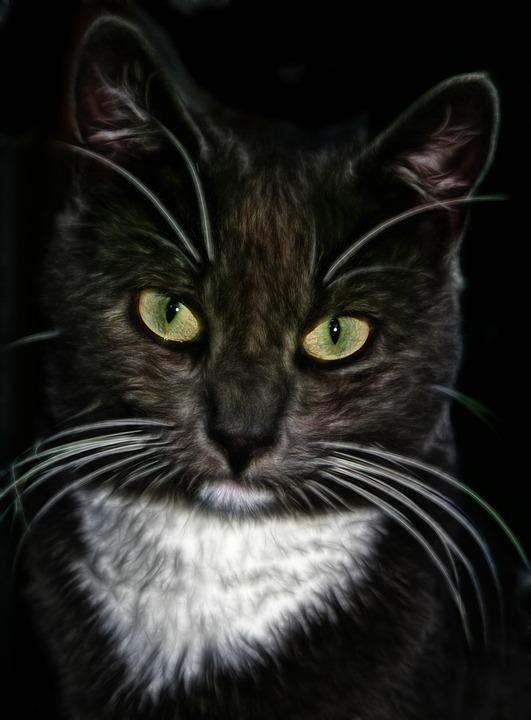 Cat, Digital Art, Cat Face, Animal, Drawing, Feline