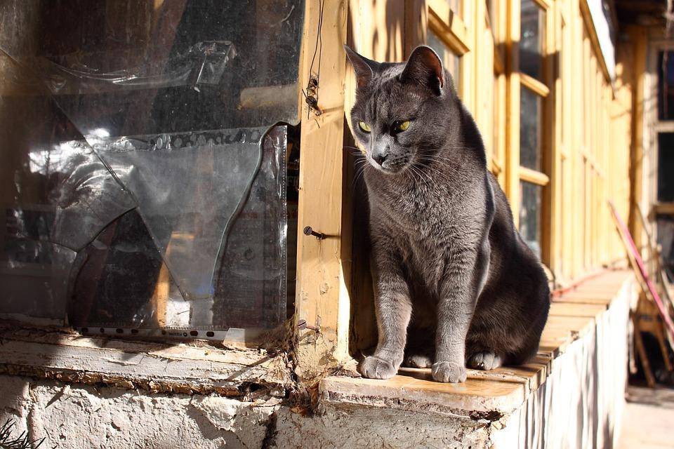 Cat, Grey, Old, Feline, Animals, Pet, Cats, Mammals