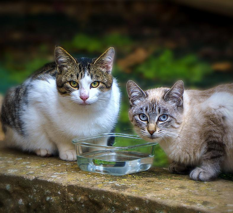 Cats, Pets, Animals, Outdoors, Domestic Cats, Feline
