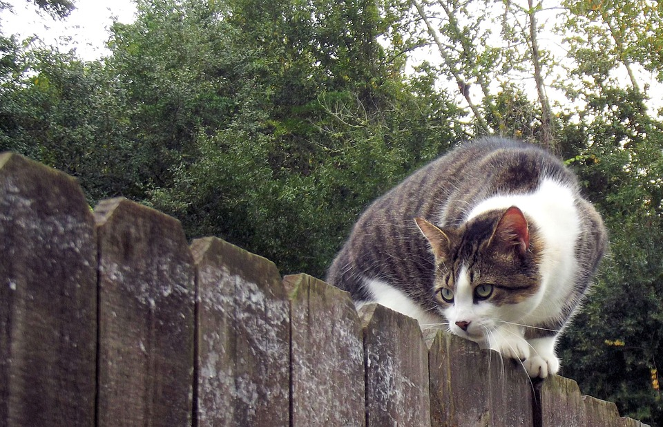 Fence, Cat, Animal, Pet, Feline, Mammal, Fur, Domestic