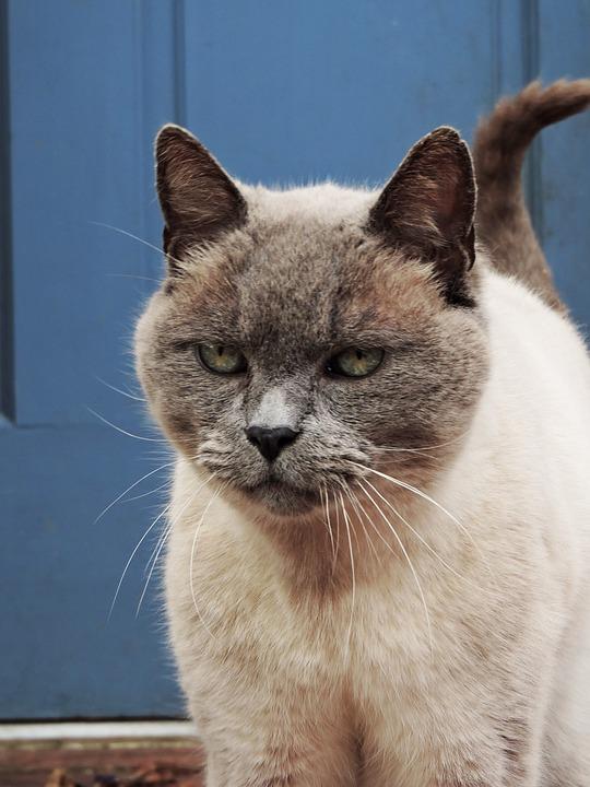 Cat, Outside, Pet, Feline, Animal, Outdoors, Gray