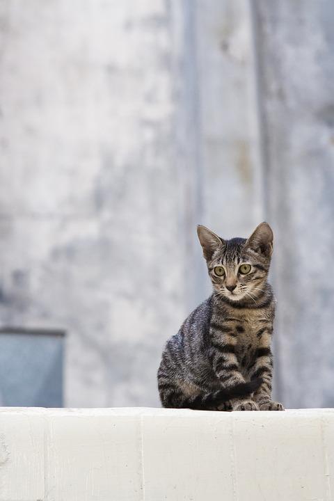 Cat, Stray, Animal, Cute, Fur, Feline, Soft, Homeless