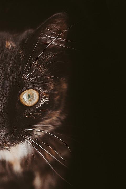 Cat, Feline, Pet, Cat's Eye, Whiskers, Face, Portrait