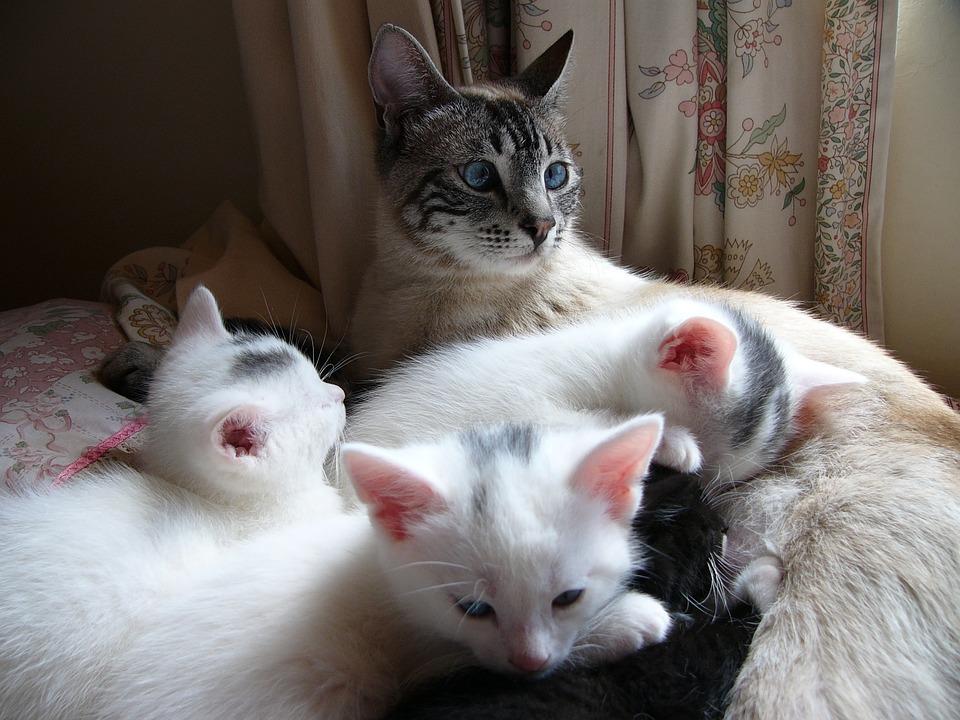 Cat, Kitten, White, Together, Family, Feline, Kitty
