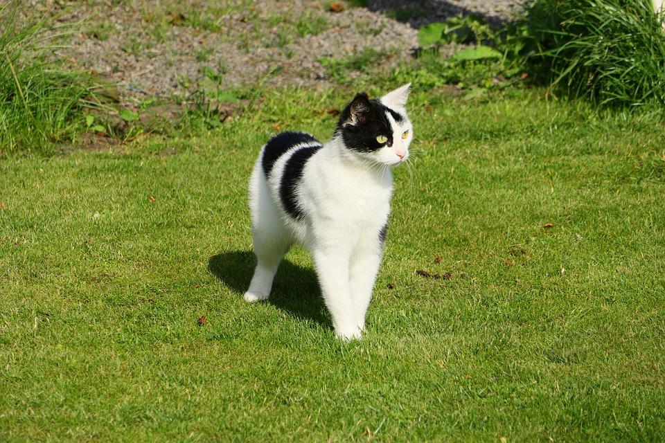 Cat, Female, Mammal, Pet, Cute, Companion, Attention