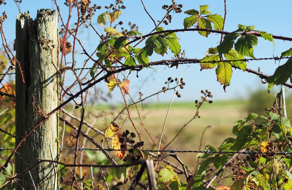 Countryside, Fence, Post, Leaves, Barbedwire, Rural