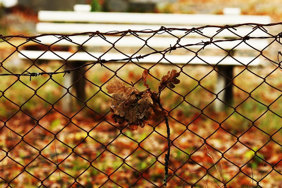 Bench, Fence, Autumn