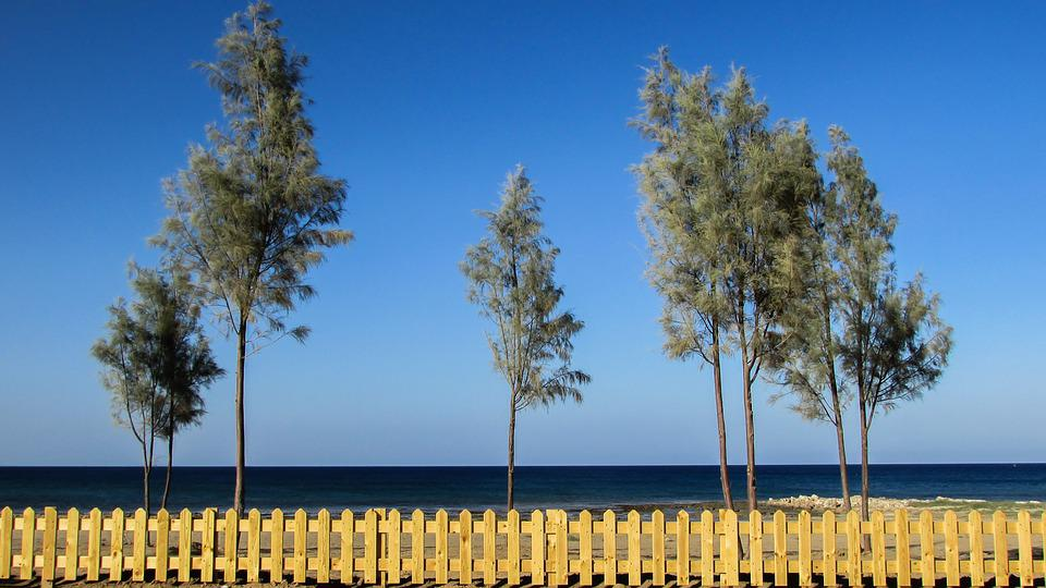Cyprus, Ayia Triada, Beach, Trees, Fence, Scenic