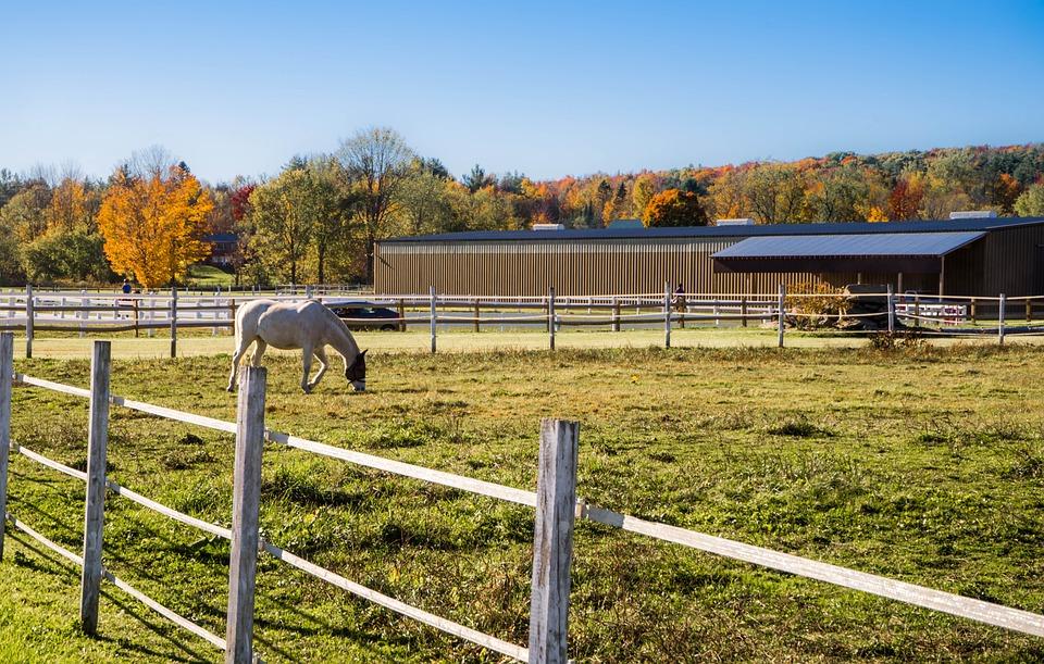 Foliage, Vermont, Fence, Barn, Horse, Landscape, Rural