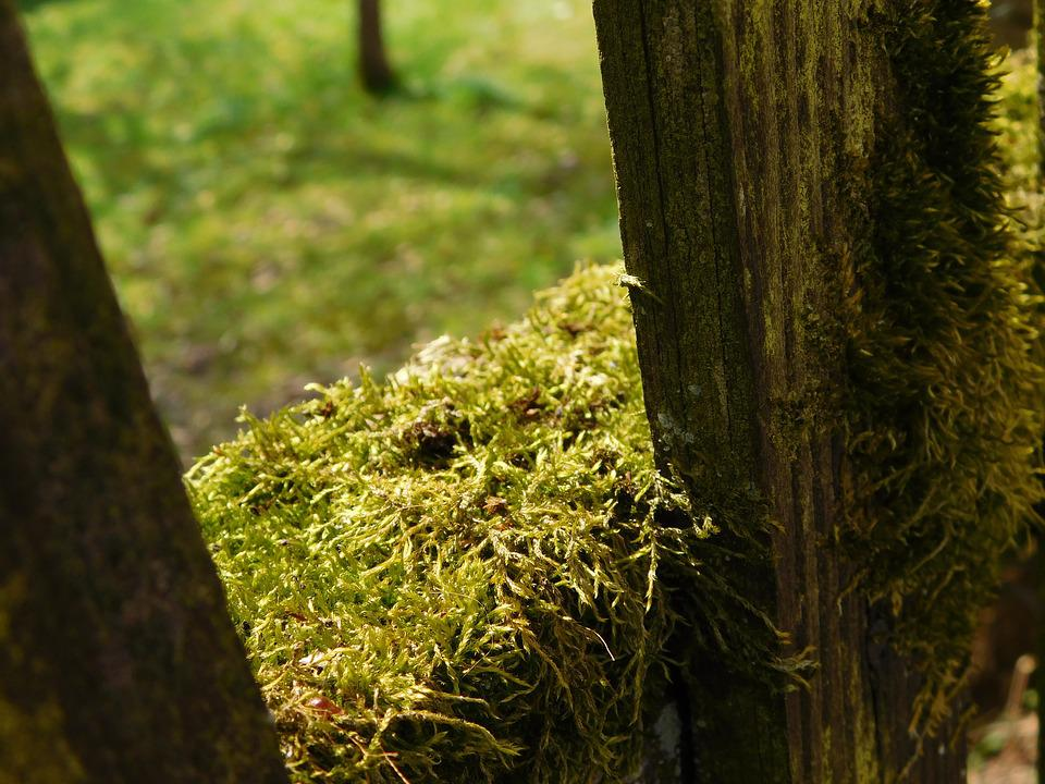 Moss, Wooden Boards, Fence, Mossy