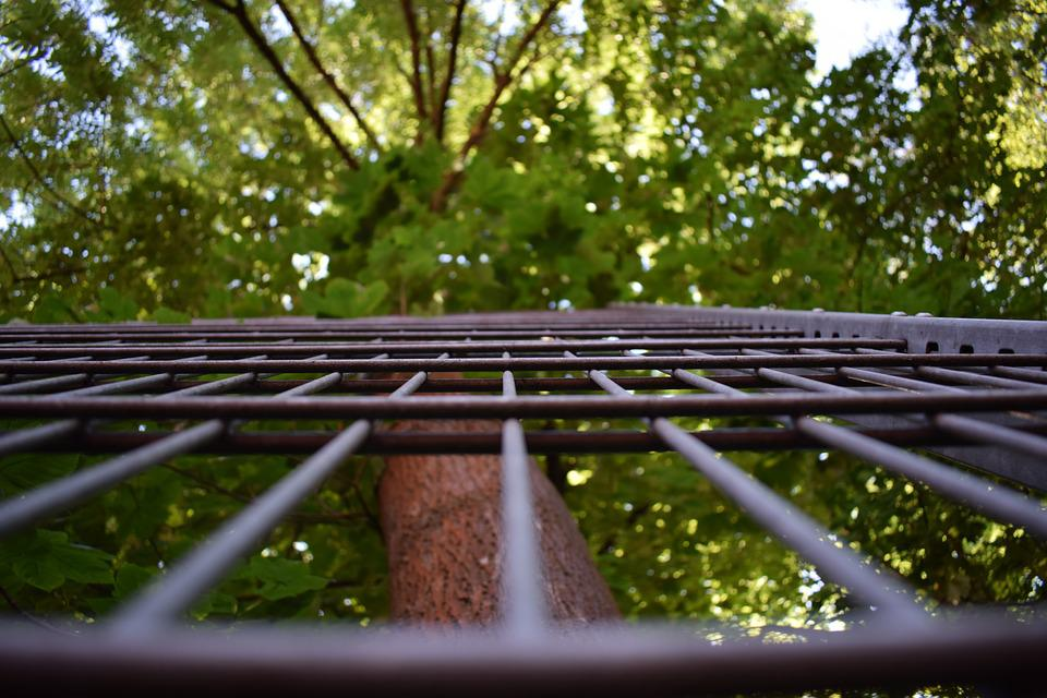 Grid, Nature, Fence, Forest, Trees, Landscape, Wood