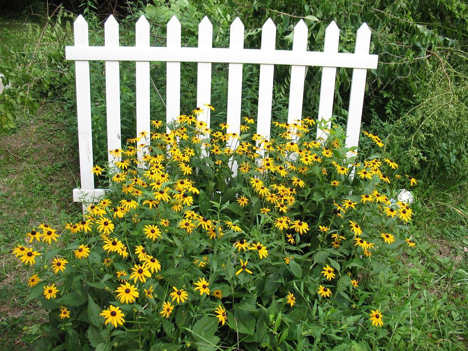 Fence, Picket Fence, Flowers, Cone Flowers, Homestead