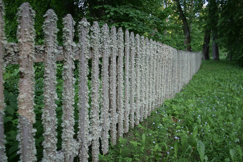 Fence, Tree, Village, Old Tree, Green, Rime