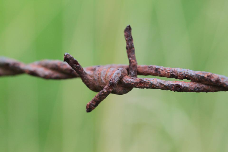 Barbed Wire, Wire, Fence, Metal, Rusty, Risk, Thorn