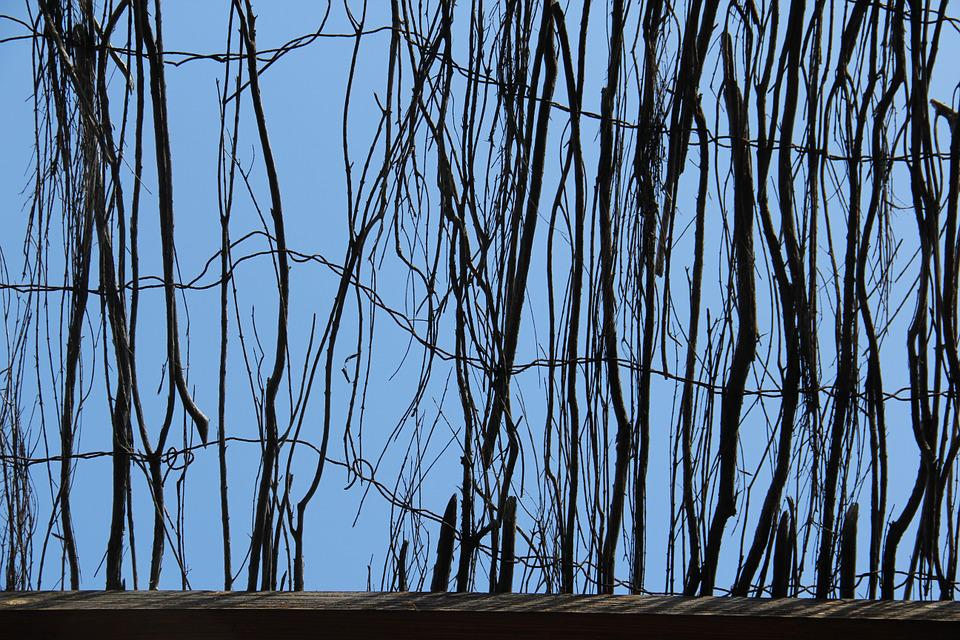 Sky, Branch, Fence, Texture, Background