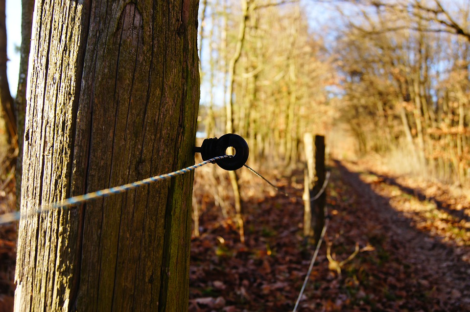 Electric Fence, Away, Fence, Coupling, Forest, Trees