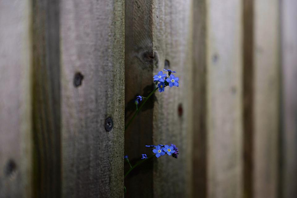 Forget Me Not, Fence, Wood Fence, Garden Fence
