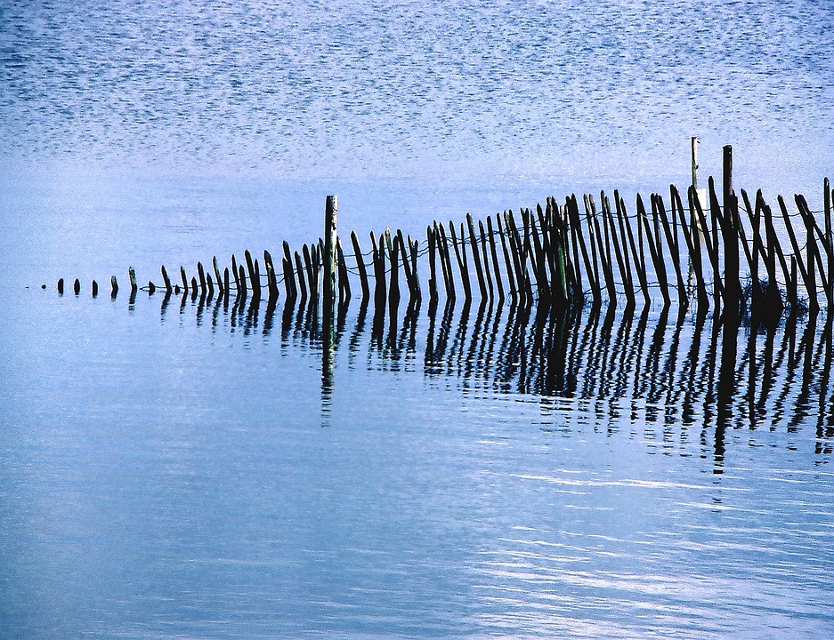 Fence, Fencing, Wood, Wooden, Wire, Posts, Water