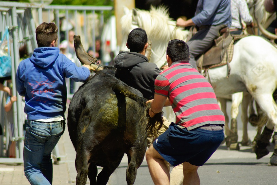 Camargue, Village Festival, Bulls, Gardians, Feria