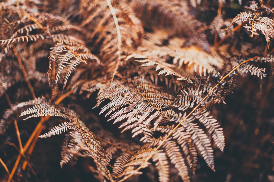 Blur, Close-up, Environment, Fern, Focus, Leaves, Light