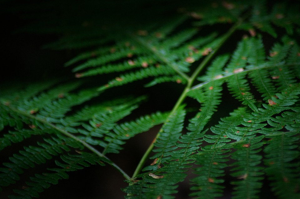 Fern, Nature, France, Green, Plant, Macro