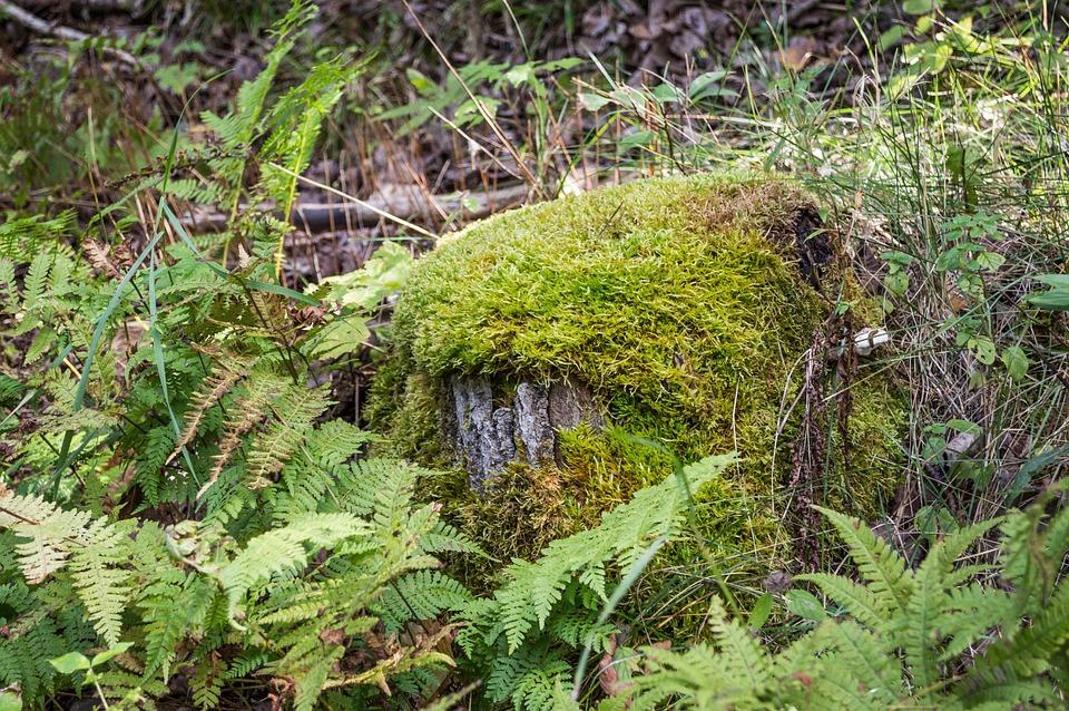 Moss, Fern, Nature