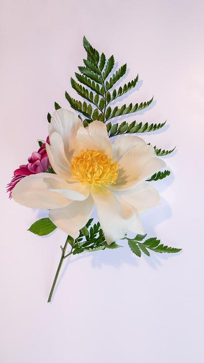 Floral Decoration, Peony, Gerbera, Blossom, Bloom, Fern