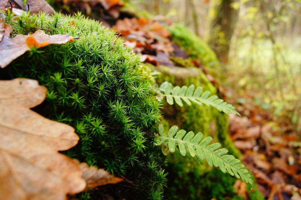 Autumn, Plant, Moss, Fern, Landscape