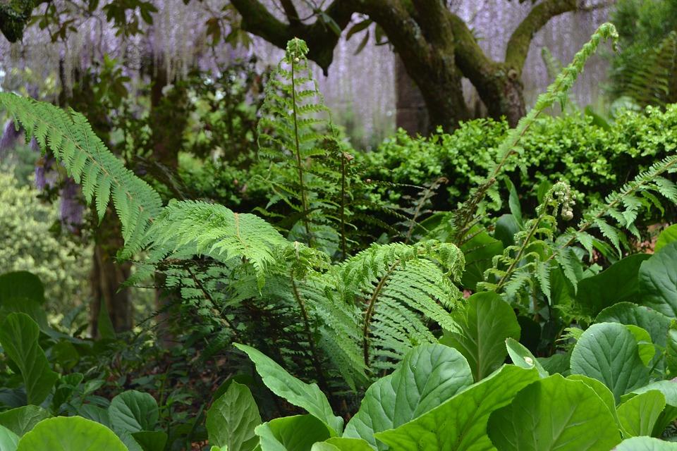 Ferns, Forest, Buçaco