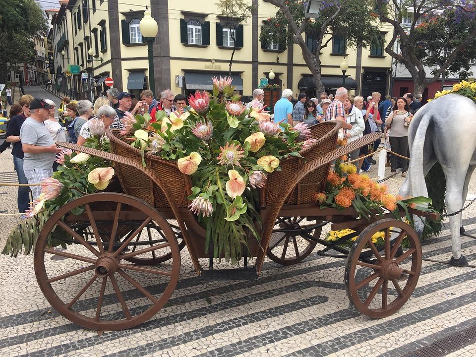 Flower, Festival, Madeira